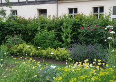 Kräutergarten (576x1024)